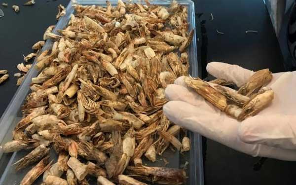 Хитин для производства биопластика